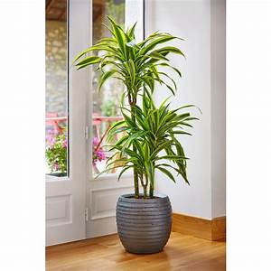 Plantes Vertes D Intérieur Photos : superior plante verte d interieur 6 photos de magnolisafleur ~ Preciouscoupons.com Idées de Décoration