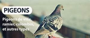 Faire Fuir Les Pigeons : comment faire fuire les pigeons beautiful ludwig ~ Melissatoandfro.com Idées de Décoration