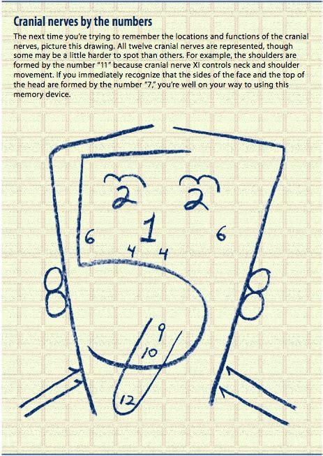tips  mnemonics  remembering   cranial nerves nursing crib