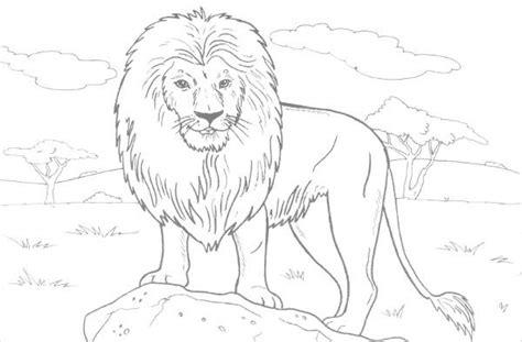 jungle coloring pages  png  premium templates