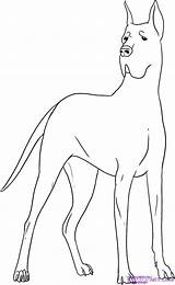 Dane Coloring Pages Dog Draw Google Drawing Danes Doodle Colouring Step Dogs Steps Inspiration Sketch Quilts Simple Pitbull Face Animal sketch template
