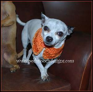 pumpkin spice dog collar crochet