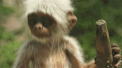 Wild Animals Spy Nature Monkey Thirteenwnet Ass