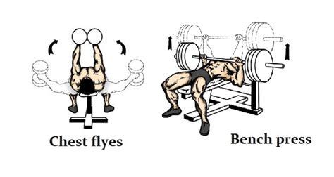 Pec Deck Flyes Dumbbells by Fitness Basics Beginner Exercisesrivertea