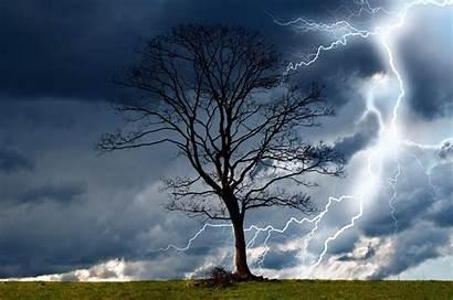 Rain Storm Lightning Wind Dangerous Nature Trees