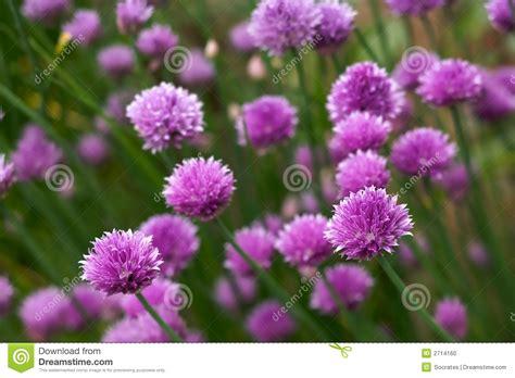 herb florist beautiful herb flowers stock photo image 2714160