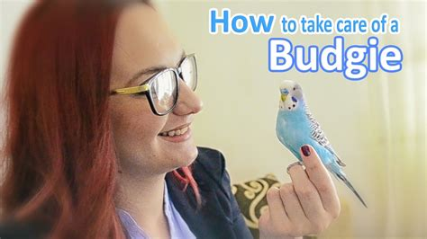 how to take care of a budgie parakeet all the basics