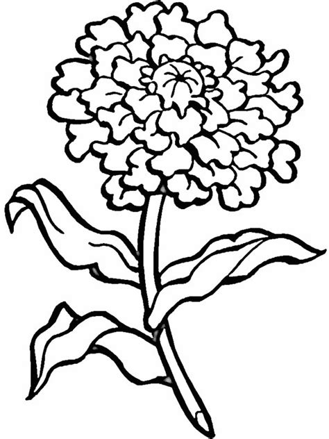 blooming flower coloring page  print