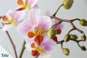 Orchideen Umtopfen Wurzeln Schneiden : orchideen luftwurzeln abschneiden so machen sie es richtig ~ A.2002-acura-tl-radio.info Haus und Dekorationen