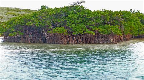 islands tilloo pond abaco bahamas private island