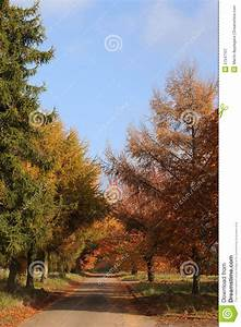 Road Through Autumn Trees Royalty Free Stock Photography ...