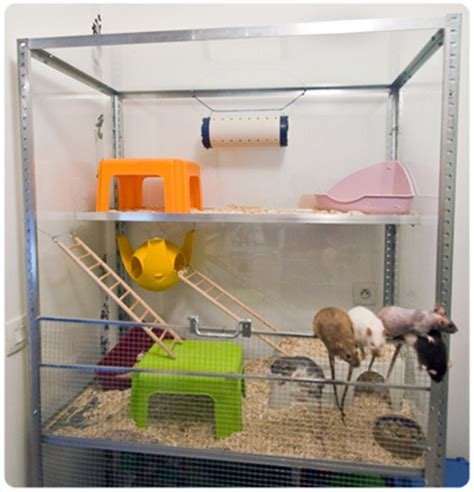 maison dans la cagne habitat du rat domestique portail du lord