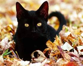 black cats black cat random wallpaper 32500172 fanpop