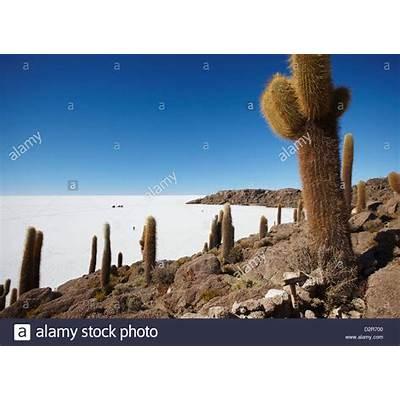 Isla del Pescado (Fish Island) on Salar de Uyuni (Salt