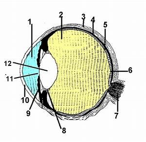 Eye Diagram Quiz - Clipart Best