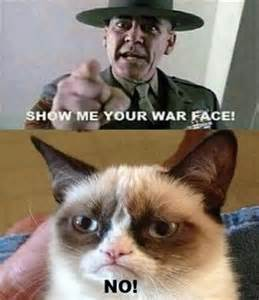 show me images of cats show me grumpy cat and war on