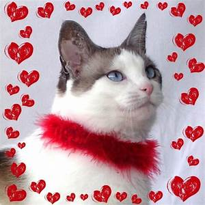 Catsparella: 10 Cat Themed Valentine's Day Gift Ideas For ...