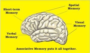 visual spatial working memory south county