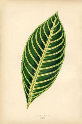 vintage printable botanical leaf instant art