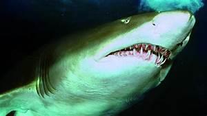 Humans Vs Sharks  Who U0026 39 S Biting Whom