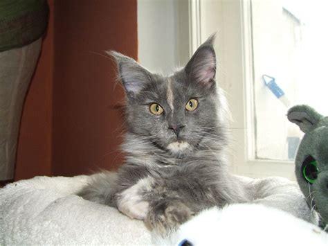 warum pinkelt katze auf teppich hervorragend katzenhaltung