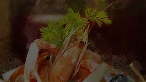 La Cabane Toulouse : accueil la cabane restaurants ~ Nature-et-papiers.com Idées de Décoration