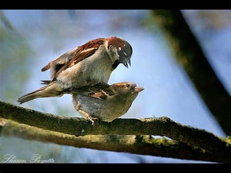 how do birds reproduce bird reproduction