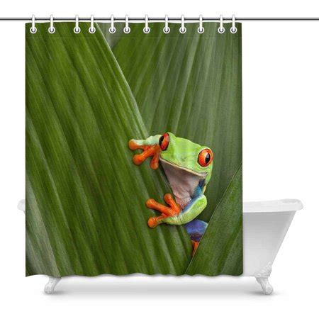 mkhert red eyed tree frog cute tropical rainforest animal