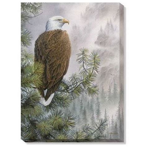 bald eagles watchful eye wrapped canvas art