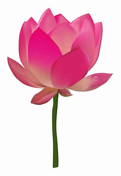 Lotus Flower Transparent Clipart Flowers Purepng Clip