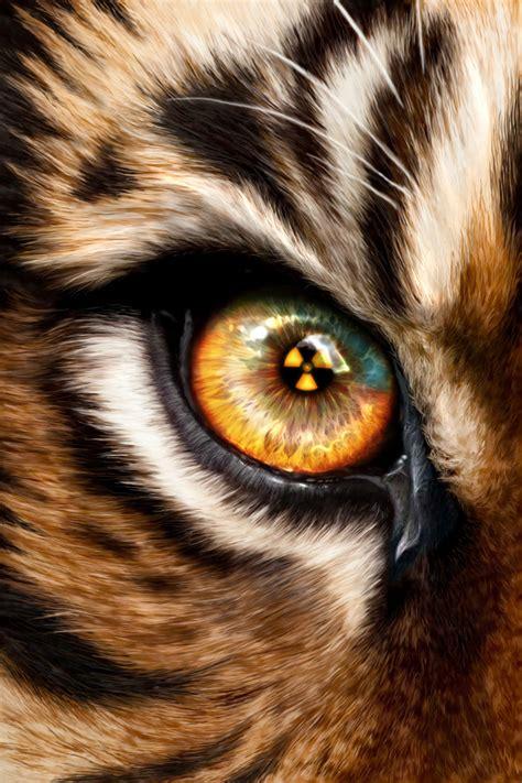 tiger eye tiger eye close up