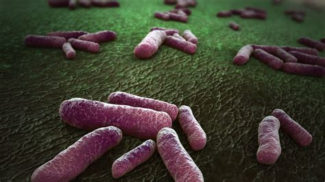 3D Parasite Image - HD - Scientific Animations