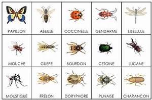 Abri à Insectes : insectes ~ Premium-room.com Idées de Décoration