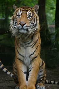 20 Beautiful animal photos (20 pics) | Amazing Creatures