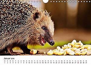 Bilder Von Igel : niedliche igel 2018 tierische impressionen wandkalender 2018 din a4 quer kalender bestellen ~ Orissabook.com Haus und Dekorationen
