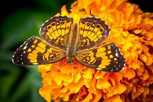 Butterfly, Wings, Macro, Flower, Orange, Bright, Wallpapers, Hd, Desktop, And, Mobile, Backgrounds
