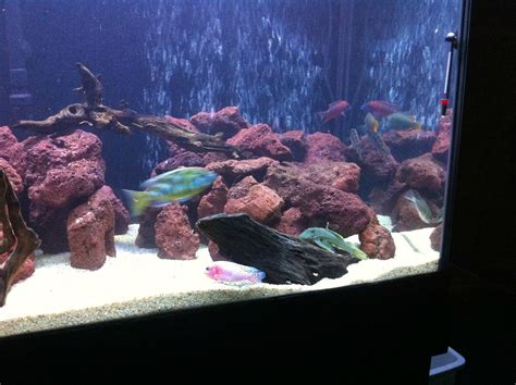 Lava L Fish Tank Diy by Cichlid Forum What Do You Guys Think Of My Tank
