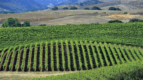 Dry Farming Techniques Could Be A Sustainable Solution For. University Of Oxford Online Big Data Meaning. Attic Insulation Houston Tx Art School In La. How To Get Business Loan With Bad Credit. Attorney General Of Texas Lipo Suction Price. How To Get Charitable Donations From Companies. Christian Credit Counselors Reviews. Online Grad School Rankings Dell It Support. Specialty Insurance Company Email Box Html