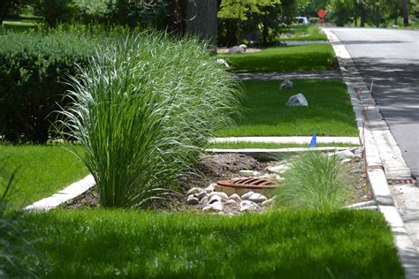 what is landscapping drought landscaping the landscape and tree company