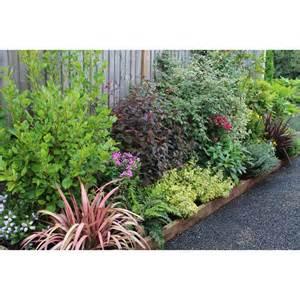 evergreen border shrubs placing top 50 chart