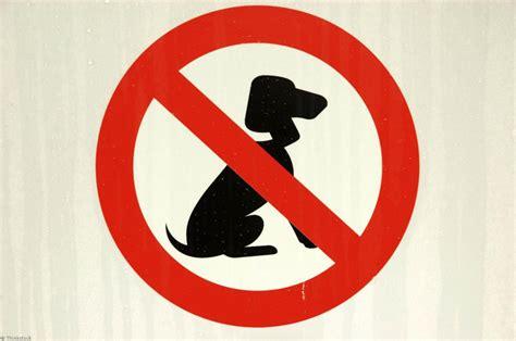 bureaux de poste nancy mon chien peut il m accompagner partout lorraine magazine