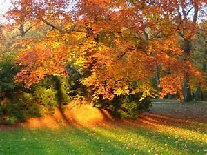 Schöne Herbstbilder Kostenlos : herbst in m nchen foto bild jahreszeiten natur bilder ~ A.2002-acura-tl-radio.info Haus und Dekorationen