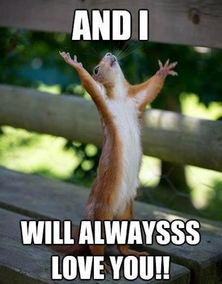 Animal Meme Generator - funny squirrels funny squirrel photos squirrel memes oh so cute pinterest squirrel