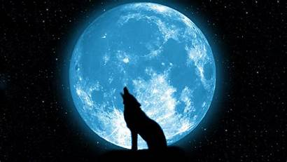 Moon Wolf Howling Wallpapers Desktop Backgrounds Mobile