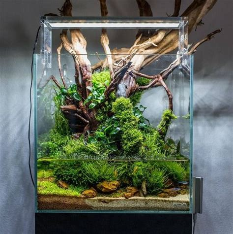 nature aquarium branches are animals could climb onto light housing almost