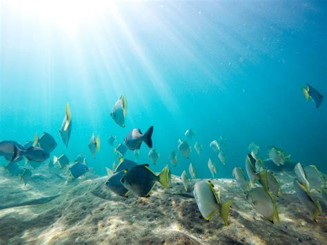 High Resolution Sports Images Free Images Sea Ocean Underwater Swimming Coral Reef Sports Snorkeling Water Sport