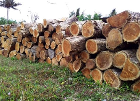 teak wood benefits indoor furniture indonesia teak