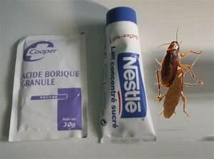 Produit Efficace Contre Les Cafards : 17 meilleures id es propos de acide borique sur ~ Dailycaller-alerts.com Idées de Décoration