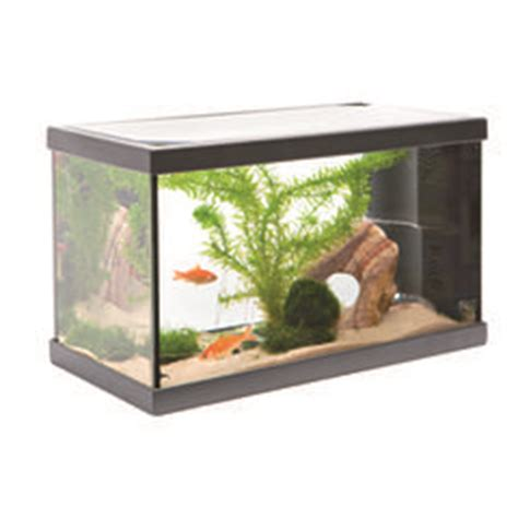 poisson pour aquarium 20l d 233 coration aquarium 20l