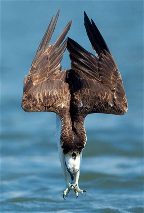 seahawk birdnote